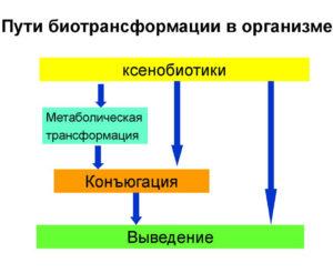 Биотрансформация