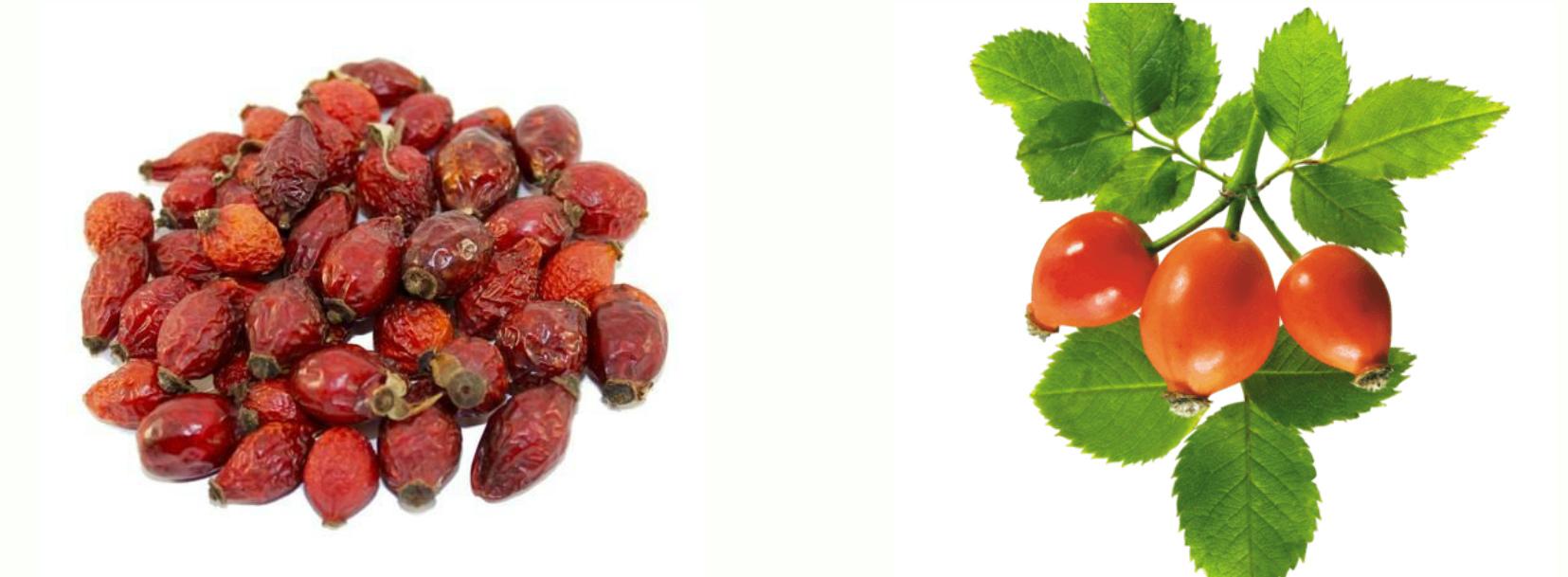 Сушеный шиповник и свежие ягоды