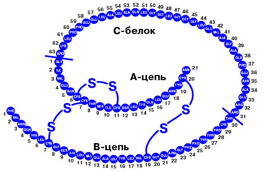 Биологический синтез и строение инсулина