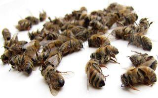 Эффективность лечения сахарного диабета пчелиным подмором