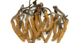 Лечебные свойства китайского гриба Кордицепс