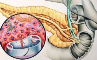 Какой орган вырабатывает инсулин? Процесс и влияние на организм