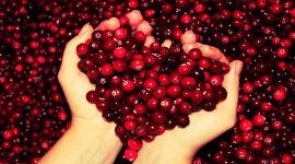 Брусника как источник здоровья при сахарном диабете 2 типа