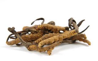 Удивительный гриб Кордицепс — применение в медицине
