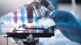 Биохимия инсулина и основные механизмы действия гормона