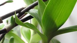Золотой ус при сахарном диабете 2 типа — состав растения и рецепты