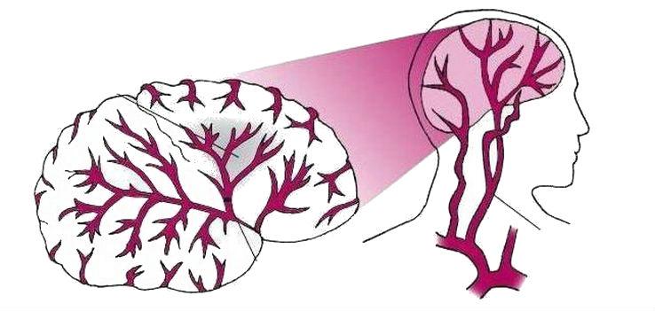 Улучшает мозговое кровообращение