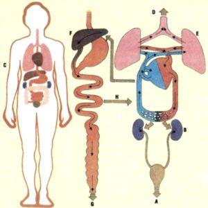Элиминируются метаболиты почками