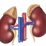 Гипофункция коры гипофиза и надпочечников