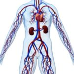 Сбои в системе кровообращения