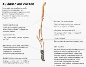 Состав Кордицепса