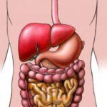 Ускоряет трансформацию молекул глюкозы в лактат в ЖКТ