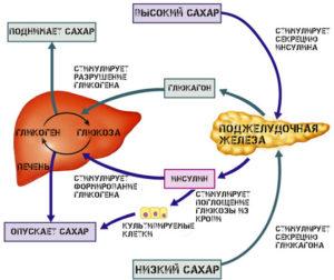 Выработка глюкагона схема