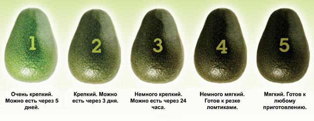 Зрелость авокадо