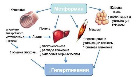 Метформин схема