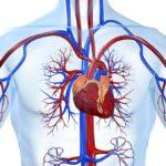 Некоторые болезни сердечно-сосудистой системы