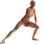 Укрепляются кости и мышечная ткань