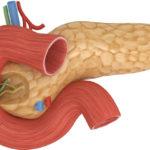Улучшает функционирование поджелудочной железы