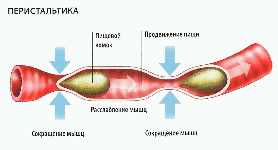 Замедление перистальтики в толстом кишечнике