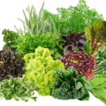 Зеленные культуры