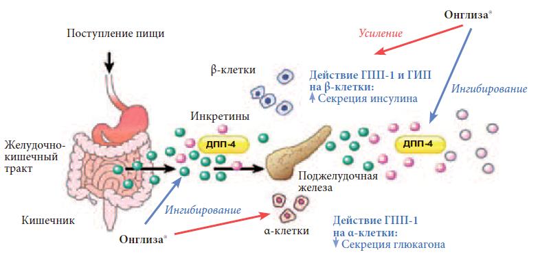 Противодиабетические препараты