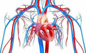 Патологии сердечно-сосудистой систем