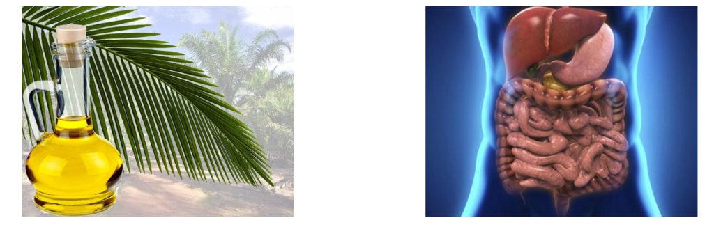 Пальмовое масло негативно сказывается на ЖКТ