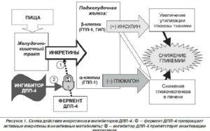 Схема действия препарата Янувия