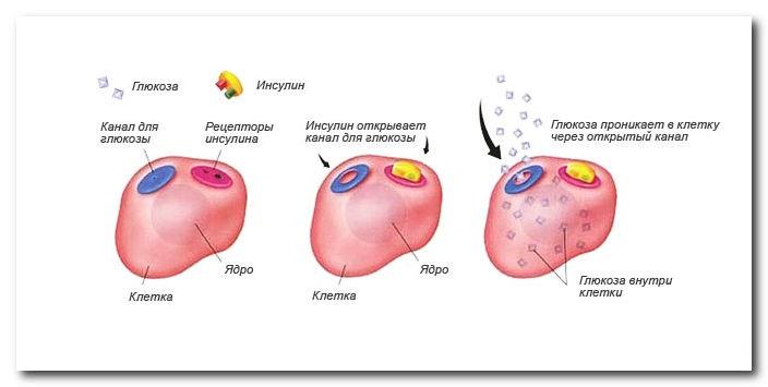 Глюкоза в анализе крови