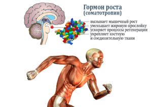 Разные гормоны роста