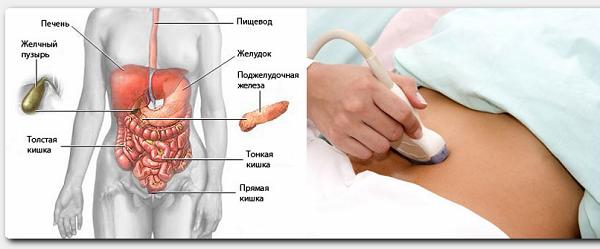 УЗИ и брюшной полости