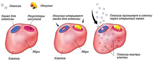 Что значит повышенный инсулин в крови
